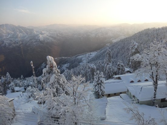 snowfall in mashobra forest sanctuary